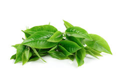 Pilha das folhas de chá verdes isoladas no branco Fotos de Stock