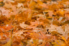 Pilha das folhas de outono imagem de stock royalty free