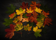 Pilha das folhas de outono coloridas Imagens de Stock Royalty Free