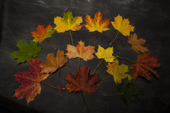 Pilha das folhas de outono coloridas Foto de Stock