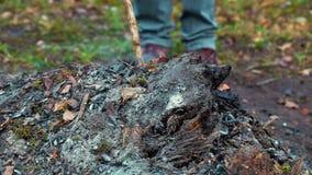 Pilha das folhas de queimadura filme