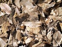 Pilha das folhas secas na luz solar da noite Foto de Stock Royalty Free