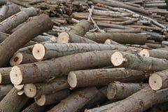 Pilha das madeiras Foto de Stock Royalty Free