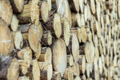 Pilha das madeiras Imagens de Stock