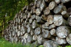 Pilha das madeiras Fotografia de Stock Royalty Free