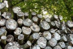 Pilha das madeiras Foto de Stock