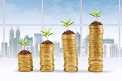 Pilha das moedas e da árvore no escritório Fotografia de Stock Royalty Free