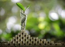 Pilha das moedas e da cédula rolada com a planta no negócio de exibição superior, economia, crescimento, conceito econômico imagem de stock royalty free