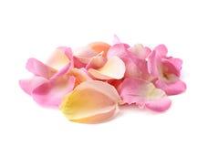 Pilha das pétalas cor-de-rosa múltiplas Foto de Stock
