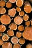Pilha de árvores de pinho novas vistas imagens de stock royalty free
