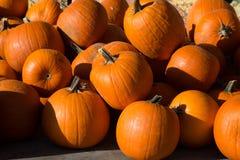 Pilha de abóboras da laranja da colheita imagem de stock