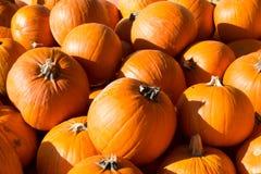 Pilha de abóboras da laranja da colheita imagens de stock