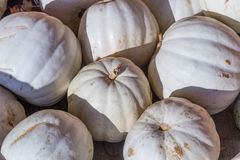 Pilha de abóboras do albino da colheita fotografia de stock