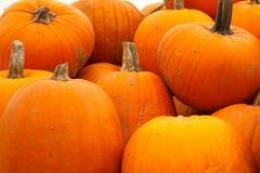 Pilha de Autumn Pumpkins alaranjado brilhante Foto de Stock Royalty Free