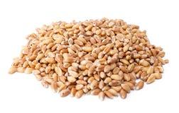 Pilha de bagas de trigo Imagens de Stock