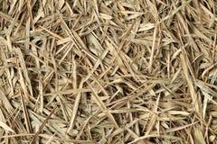 Pilha de bambu do feno seca no outono, fundo marrom textured com folhas de bambu da cor da floresta imagem de stock