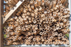 Pilha de bambu seco para o fundo Imagem de Stock