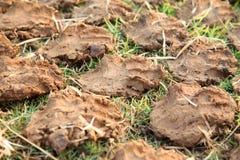 Pilha de bolos secos do estrume da vaca Imagem de Stock Royalty Free