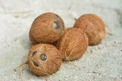 Pilha de cocos marrons pequenos na areia fotografia de stock royalty free