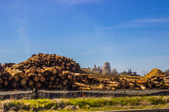 A pilha de corte entra a maneira de serrar madeira o moinho Imagem de Stock