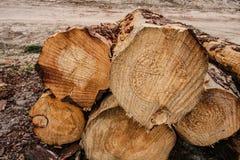 A pilha de corte entra a silvicultura Imagens de Stock Royalty Free