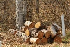 A pilha de entra uma floresta Imagem de Stock