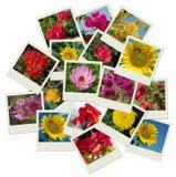 Pilha de fundo da colagem dos tiros da flor Fotos de Stock Royalty Free
