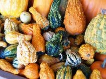 Pilha de Gourds decorativos coloridos Fotografia de Stock Royalty Free