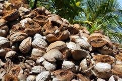 Pilha de husks rejeitados do coco Imagens de Stock