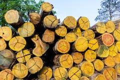 Pilha de Loggging das árvores Fotografia de Stock