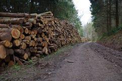 Pilha de logs Imagens de Stock Royalty Free