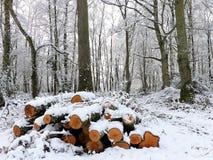 Pilha de logs cobertos de neve, terra comum de Chorleywood, Hertfordshire fotos de stock