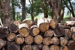 A pilha de madeira Imagens de Stock