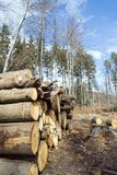 A pilha de madeira de entra a área do desflorestamento Fotografia de Stock