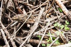 Pilha de madeira de ramos pequenos fotos de stock royalty free