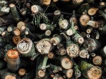 Pilha de madeira do fogo Fotografia de Stock Royalty Free