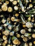 Pilha de madeira do fogo Foto de Stock Royalty Free