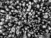 Pilha de madeira do fogo Fotografia de Stock