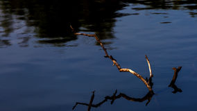 Pilha de madeira inoperante na água Imagens de Stock