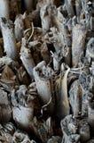 Pilha de madeiras da madeira serrada Imagens de Stock Royalty Free