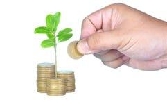 Pilha de moedas com plantas emergentes e mão isoladas no branco Fotografia de Stock
