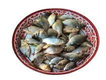 Pilha de muitos peixes na bandeja fotografia de stock