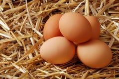 Pilha de ovos marrons na palha Imagem de Stock