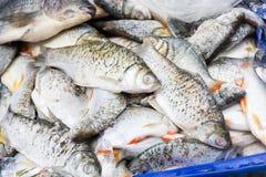 Pilha de peixes frescos em um carro foto de stock