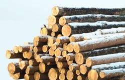 Pilha de registros de madeira Fotografia de Stock Royalty Free
