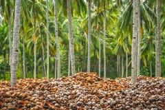 Pilha de shell vazios do coco Imagens de Stock Royalty Free