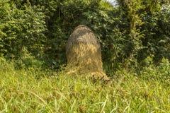 Pilha de suportes secos do feno na máscara de árvores verdes em um campo fresco imagens de stock royalty free