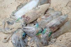 Pilha do Calamari Imagens de Stock