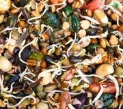 Pilha do crescimento diferente das sementes imagens de stock