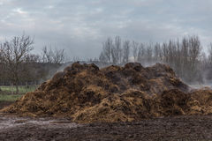 Pilha do estrume do cavalo Imagem de Stock